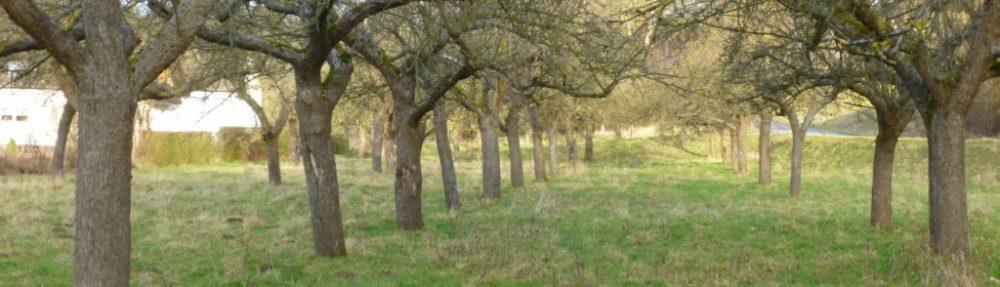 Obstbaumpflege-Fortbildung